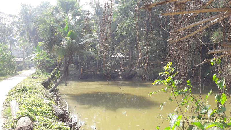A Village Pond