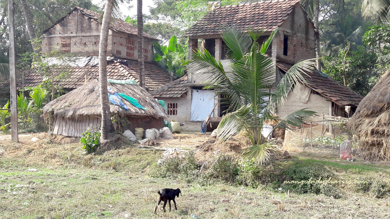 Typical Village Houses in Bengal