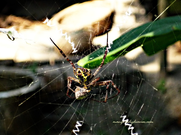 Spider and its prey