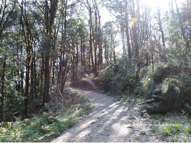 Way through Binsar Forest