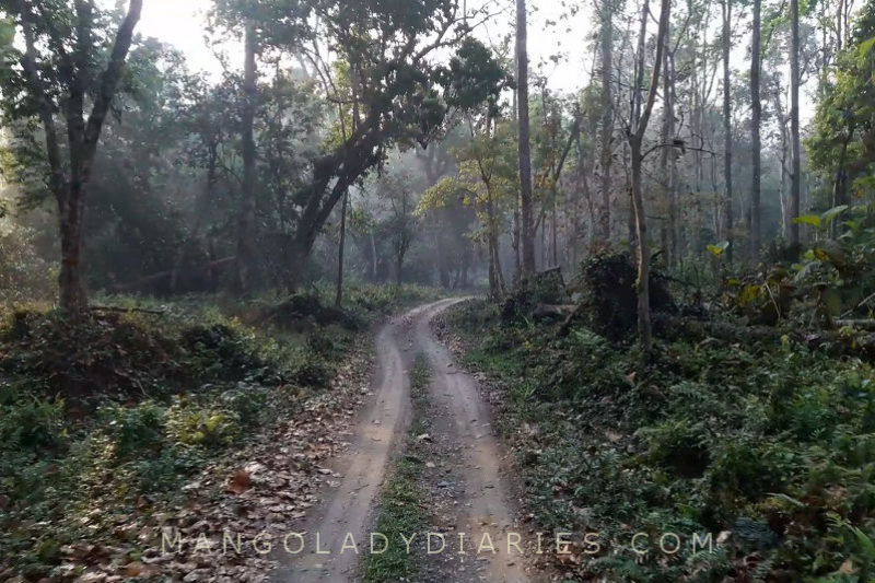 Gorumara National Park