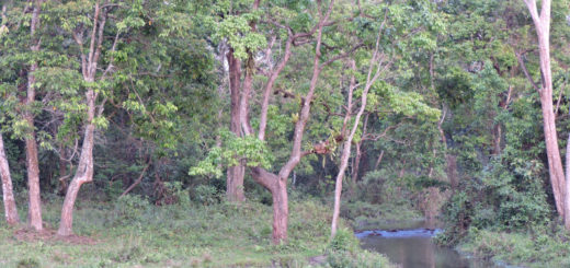 Jaldapara National Park