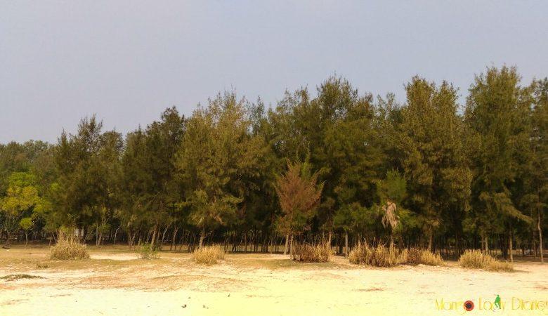 Hijli trees